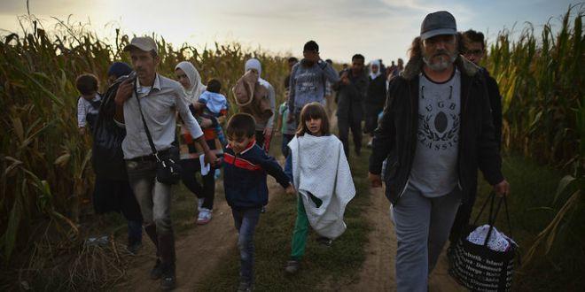 Migranti kukuruz, polje