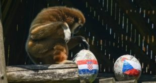 Kenti__2, hrvatska češka