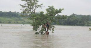 poplave, drvo